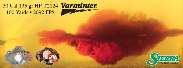 100 yard Varminter Ballistic Gel